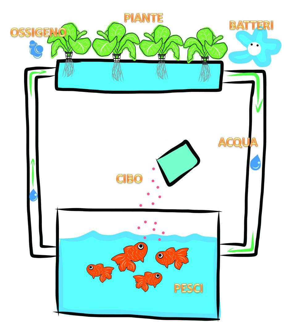 Acquaponica e ciclo dell'acqua