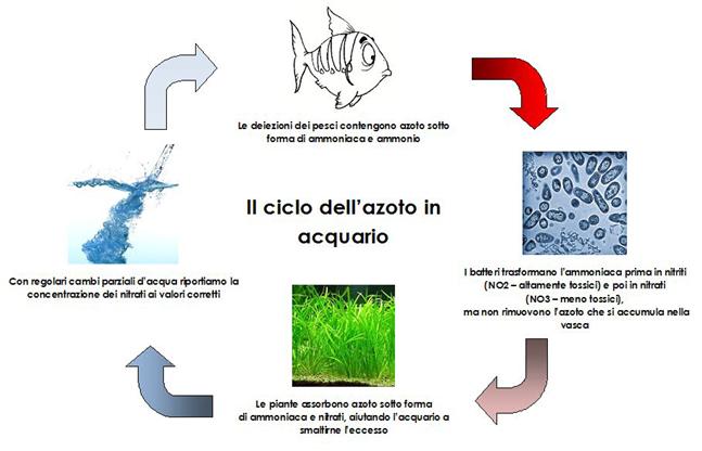 il ciclo dell'azoto nell'acquario