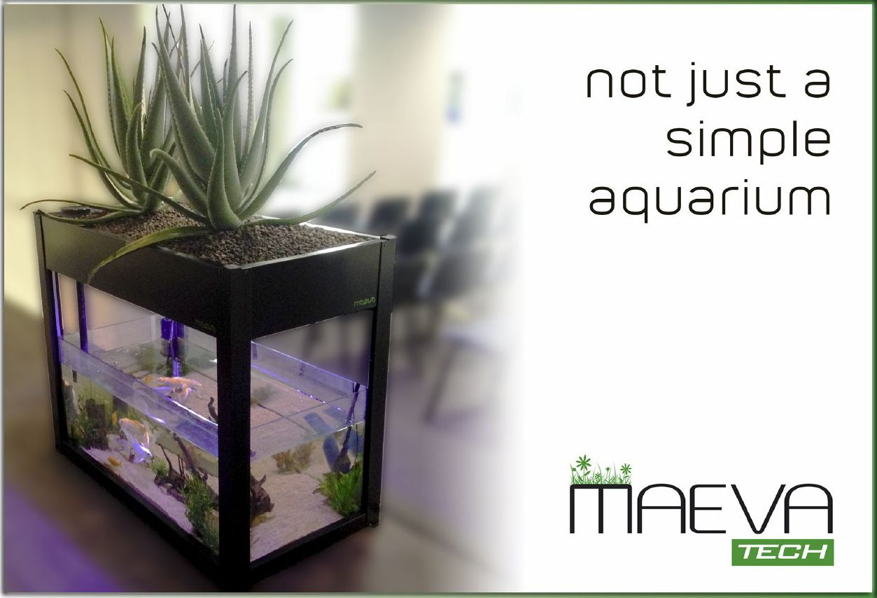 MAEVA TECH non solo un semplice acquario