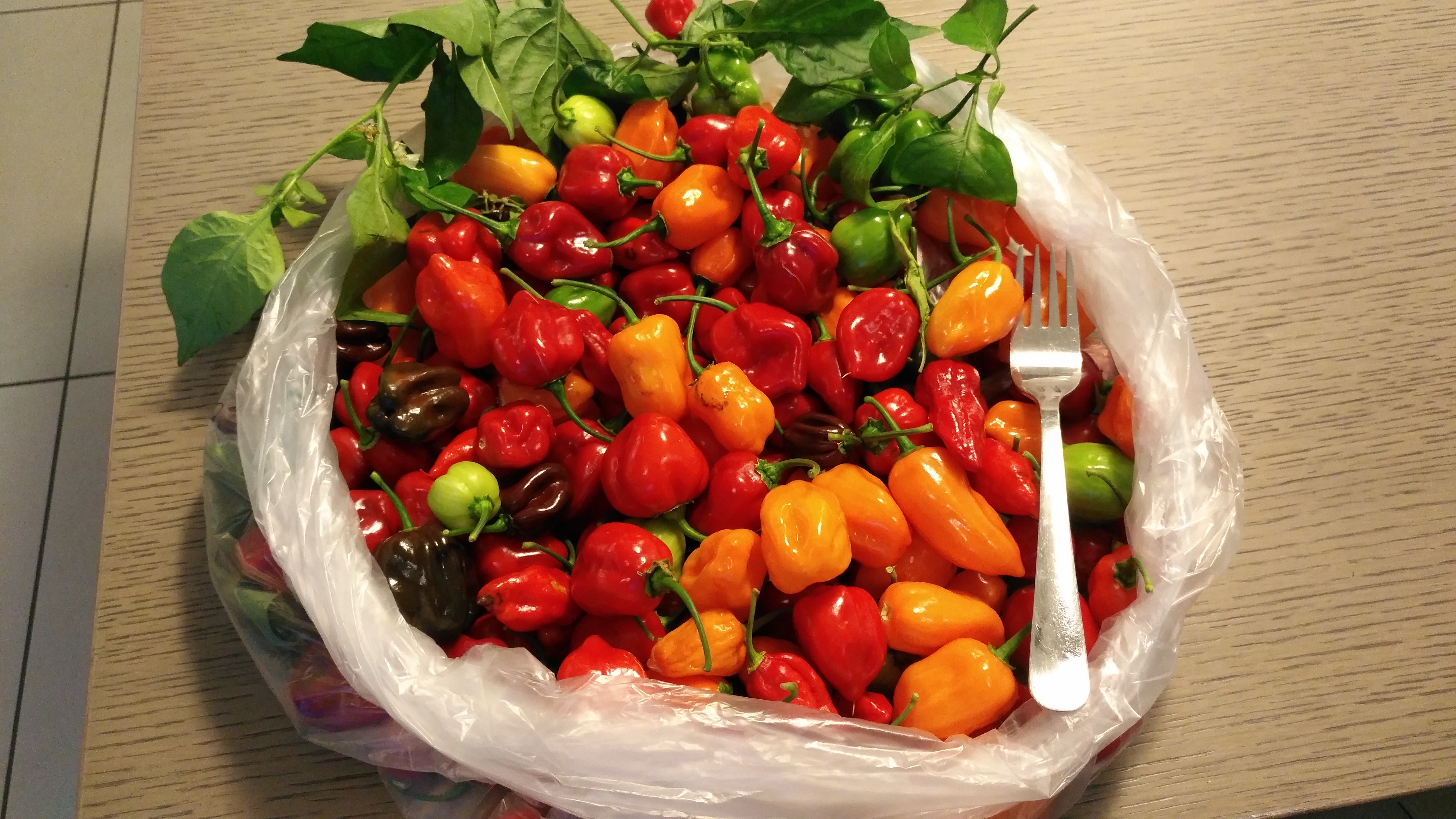 Il blog di irciponic for Acquisto piante peperoncino